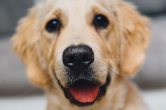 Perro en inglés - Dog